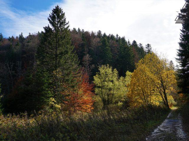 Bijeli potoci - Kamensko